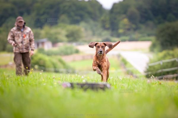Hundeservice-Peter-M-ller-jagdliche-Brauchbarkeit