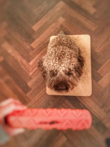 Placeboard-und-Tischarbeit-mit-Hund