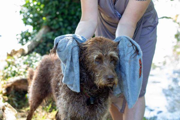 Easy Dry Hundehandtuch Anwendung